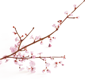 rev-slider-flower-1-300x280 rev-slider-flower-1.png